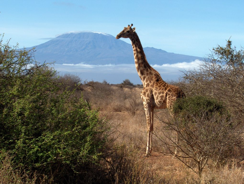 The most popular and most complete image information by a keyword mount kilimanjaro national park