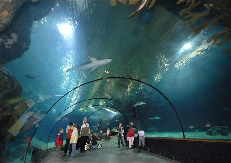 Rotterdam Zoo home to rare animals - Yallabook